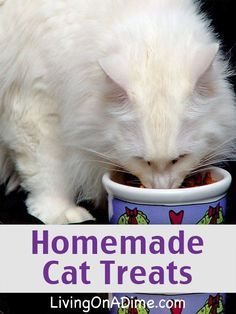 Cat Food Homemade Cat Treats Recipe - Homemade dog and cat treats are super simple to make! These recipes are a great way to make your own pet treats, especially if your pet has allergies! Homemade Christmas Treats, Homemade Cat Food, Homemade Gifts, Gato Bengali, Chesire Cat, Mundo Animal, Pet Treats, Pets, Pet Care
