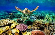 Tn Sustentável - Austrália pode perder 1 milhão de turistas por ano por causa do branqueamento da Grande Barreira de Corais