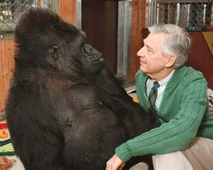 """Most people have heard of Koko, the gorilla who could speak about 1000 words in Sign Language, and understand about 2000 in English. What most people don't know, however, is that Koko was an avid Mister Rogers' Neighborhood fan. When Fred Rogers took a trip out to meet Koko for his show, not only did she immediately wrap her arms around him and embrace him, she did what she'd always seen him do onscreen: she proceeded to take his shoes off."" <--Aww! This is so sweet and awesome! :)"
