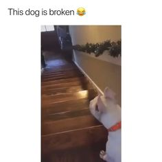 Funny Animal Jokes, Funny Dog Memes, Funny Dog Videos, Funny Video Memes, Crazy Funny Memes, Funny Short Videos, Really Funny Memes, Funny Animal Pictures, Funny Relatable Memes
