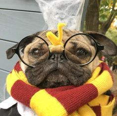 PHOTOS: Definitive Proof That Doug the Pug (and Pugs in General) Are Winning Halloween