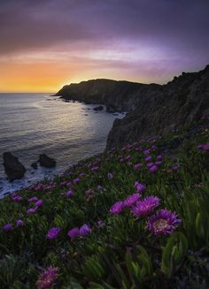 "americasgreatoutdoors:  Please take a moment to enjoy this gorgeous spring scene from Point Reyes National Seashore in California. Imagine the smell of the salt air and blooming flowers, the call of the birds and the warmth of the setting sun on your skin. Let everything else melt away. As photographer Nick Steinberg says, ""Every time I'm there, I feel like the only one on earth."" Photo courtesy of Nick Steinberg."