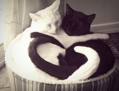 opposites attract..... AWE, that is so cute!!