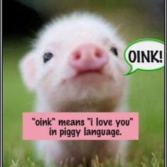 Oink <3