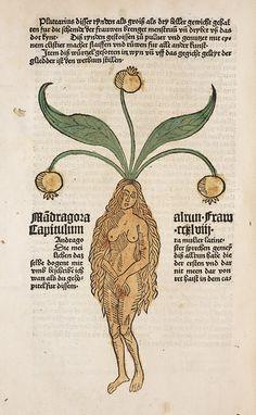From Hortus Sanitatis, 1485: https://pinterest.com/pin/287386019946939922/.