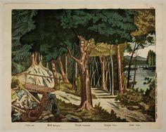 Wald (Hintergrund.) No. 8.