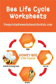 I created this Bee Life Cycle free printable worksheet because I couldn't find any that were suitable for my son online. He loves insects and we even planted some wildflowers in the garden hoping there will be plenty of pollinators for him to observe this coming Spring! I hope you find this to be a useful addition to your bug learning unit too. #beelifecycle #buglearningunit #springscienceprintable #preschoolinsects #freeprintableworksheetsforkids Free Printable Worksheets, Worksheets For Kids, Free Printables, Honey Bee Life Cycle, Lifecycle Of A Frog, Frog Life, Addition Games, Math Games For Kids, Life Cycles