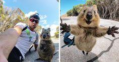 Man Meets Quokka, Quokka Won't Leave Him Alone   Bored Panda