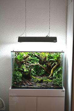 Terrascaping: dart frog vivarium by TOOAmazing journal! It makes use of ADA Amazonia and some aquatic plants and mosses inside. Take a look here.