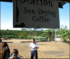 Sundrying coffee, Doka Estate, Alajuela, Costa Rica