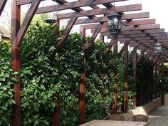 Ezeket ültesd tuja helyett MOST! Garden Inspiration, Pergola, Arch, Outdoor Structures, Landscape, Plants, Backyard Ideas, Gardens, Lawn And Garden