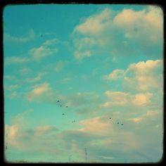 Oiseaux dans les Nuages