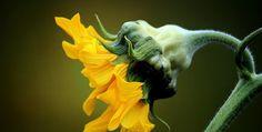 Meaning of Flower in Javanese