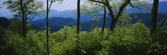 Great Smoky Mountains National Park, Tennessee, USA Prints of TN