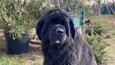 Am Doolittlehof - Hundezüchter in Niederfellabrunn Dogs, Animals, Puppys, Pet Dogs, Animales, Animaux, Doggies, Animal, Animais
