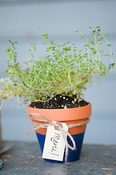 DIY potted herb favors - perfect for weddings or showers!