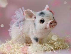 adorable-needle-felt-wool-animals-tatiana-barakova-13