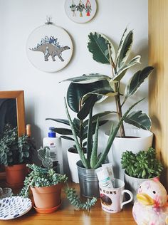 My Plant Story - Katrina Sophia Fly Traps, Plant Care, Houseplants, About Me Blog, Indoor, Interior, House Plants, Indoor House Plants, Potted Plants