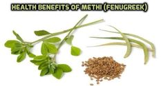 What is Fenugreek Seed Extract? Fenugreek Benefits Where to buy Fenugreek Testosterone Fenugreek Breastfeeding Organic Fenugreek Seeds Capsules for Diabetes Fenugreek Breastfeeding, Fenugreek Benefits, Henna Leaves, How To Cure Pimples, Natural Healing, Holistic Healing, Natural Cures, Natural Wonders, Weight Gain