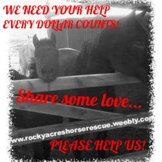 Dante and Ranger on the way....need to get more Hay Desperately! All lined up just need $200 more......   Every dollar counts please help!  www.rockyacreshorserescue.weebly.com