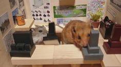 【閒聊】小倉鼠在小酒館裡賣小清酒和小墓碑 @世界之不可思議 哈啦板 - 巴哈姆特
