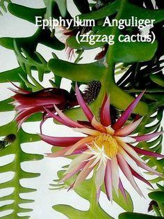 De 7 hipste hangplanten als blikvanger thuis of op kantoor | Storyplanter Orchid Cactus, Indoor Plants, Orchids, Cacti, Flowers, Gardening, Places To Visit, Succulents, Home