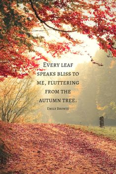 16 Autumn Quotes to Enchant and Deepen the Soul autumn quote by Emily Bronte with fall tree Autumn Cozy, Autumn Trees, Autumn Leaves, Autumn Fall, Happy Autumn, Autumn Scenery, Autumn Garden, Season Quotes, Nature Quotes