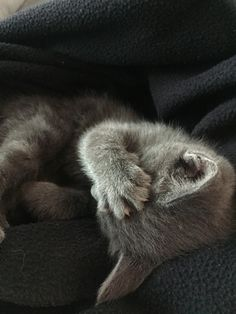 Puck's sleeping