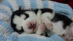 Sleepy beauty♡