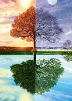 Puzzle The seasons tree, Výrobca Schmidt, 500 dielikov Broken Screen Wallpaper, Tree Wallpaper, Digital Art Photography, Nature Photography, Schmidt, Pine Tree Tattoo, Live Oak Trees, Single Tree, Tree Canvas