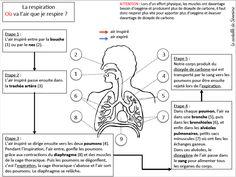 Carte mentale (organigramme) : la respiration - Le cartable de maîtresse Séverine