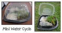 Create a Mini Water Cycle in a rotisserie chicken container! Blog post includes details.
