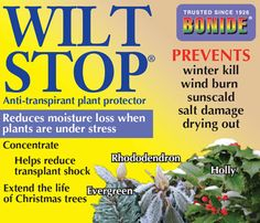 #Wilt - #Stop: A timely application of #Wilt #Stop in #Late #Fall #Before #Freezing temperatures set in, can make a big difference in the amount of #browning that occurs on #hollies, #boxwood #azaleas and #rhododendrons. #Pines, #firs, #junipers & #spruces planted in the fall, could also be sprayed. It's generally not necessary to spray established trees as their root systems are developed and more tolerant of the fluctuating conditions that lead burning damage.