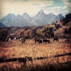 View of the Tetons from GVRR in Jackson Hole, WY
