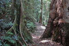 Located on Mt Glorious, this 4.3km easy-grade walk incorporates the lush Rainforest Circuit which passes through a palm valley on the way to the falls