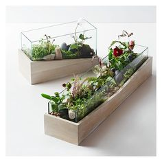West Elm Roar + Rabbit Angled Wood Terrarium, Medium - Planters &... ($60) ❤ liked on Polyvore featuring home, home decor, floral decor, brown, wood flower planters, flower stem, succulent terrarium, wooden home decor and wood container