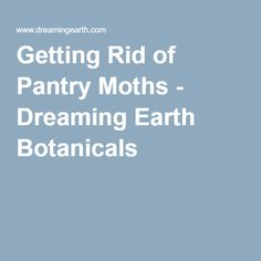 Getting Rid of Pantry Moths - Dreaming Earth Botanicals