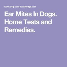 Ear Mites In Dogs. Home Tests and Remedies.