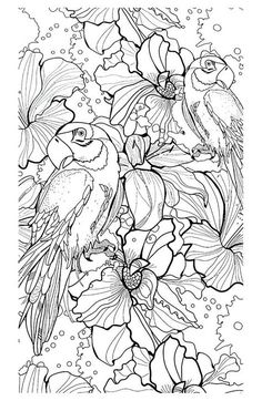adult parrot difficult coloring pages printable and coloring book to print for free. Find more coloring pages online for kids and adults of adult parrot difficult coloring pages to print. Bird Coloring Pages, Adult Coloring Book Pages, Colouring Pics, Printable Coloring Pages, Coloring For Kids, Coloring Sheets, Coloring Books, Colorful Pictures, Birds