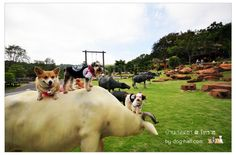 Thai buffalo statues. Lamtakong, Nakhon Ratchasima Thailand #Travel #Thailand ++ English language support >> http://ThailandHolidays7.com