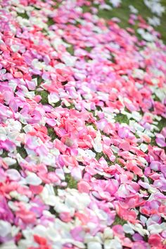 Hot pink rose petal path ceremony flowers pinterest hot pink shades of pink white rose petal path mightylinksfo