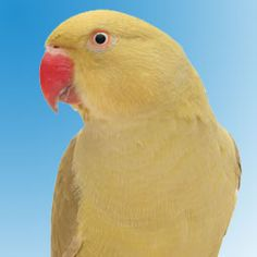 Follow these tips to keep your pet bird safe from toxins in the air.