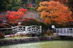 八条ヶ池 紅葉 長岡天満宮 色とりどり 京都