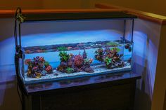 3 Foot Office Nano | REEF2REEF Saltwater and Reef Aquarium Forum