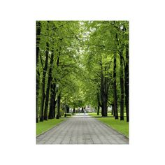 Esplanade, Green Park Near the Russian Orthodox Cathedral, Riga,... (€22) ❤ liked on Polyvore featuring home, home decor, wall art, green home decor, green home accessories, european home decor, photography wall art and photographic wall art