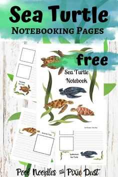 Sea turtles are fascinating animals! Find out about these amazing ocean dwellers with these free sea turtle notebooking pages! Homeschool Kindergarten, Homeschool Curriculum, Homeschooling Resources, Preschool, Sea Turtle Facts, Sea Turtles, Baby Turtles, Indoor Activities For Kids, Summer Activities