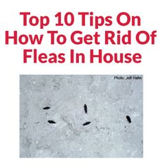 Top 10 Tips On How To Get Rid Of Fleas In House Flea In House, Four Legged, Fleas, Household Items, Decor Interior Design, Home Hacks, Interesting Facts, Beautiful Homes, Bugs