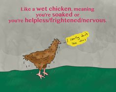 Cómo un pollo mojado. Translation: Like a wet chicken, meaning you're soaked or you're helpless/frightened/nervous. Example: I should have known to bring an umbrella, I'm like a wet chicken!