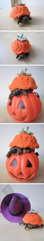 Halloween Turtle :)
