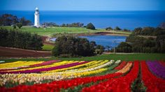 The Tulip Festival at Table Cape, Tasmania, Australia is not far away - such a stunning and awesome sight. Photograph by Scott Sporleder. Beautiful Places To Visit, Great Places, Places To Go, Amazing Places, Stuff To Do, Things To Do, World Of Wanderlust, Long Island Ny, Big Island